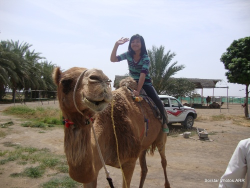 Al Fairuz Camel Farm Batihna Region Oman