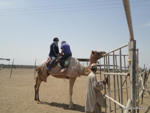 Sheik Fairuz Camel Farm