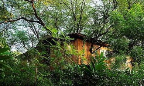 Jaiphur India Tree house