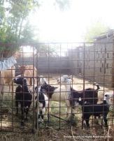 Farm Pic-Al Qarah