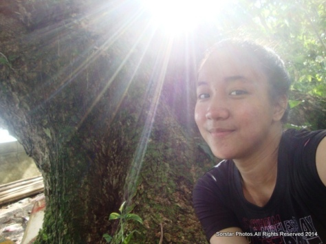Acacia Tree.Sorsogon Province,Bicol Region